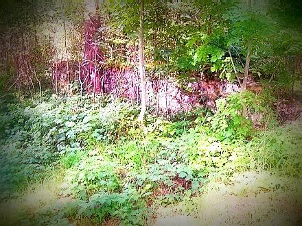 pozostałości muru okalającego dawny cmentarz z I WŚ
