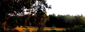 Ule we wsi Cisie -tradycja pozostała do dzisiejszych czasów