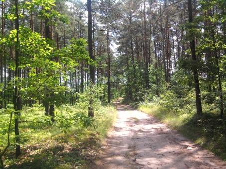 Droga leśna wiodąca do wsi Gaj Zuzowy od drogi 3921E z Przedborza